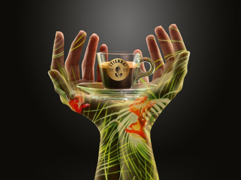 gedap il progetto lavazza tierra il caffè sostenibile