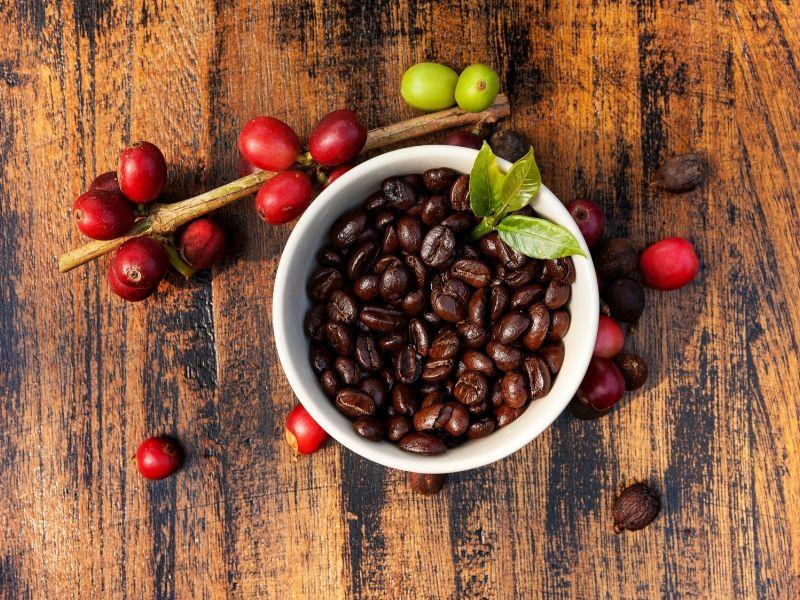 chicchi e bacche rosse di caffè
